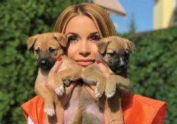X5 и Фонд продовольствия «Русь» запускают «Корзину доброты» для животных в приютах